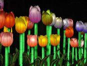 Dandenong Festival of Lights 5