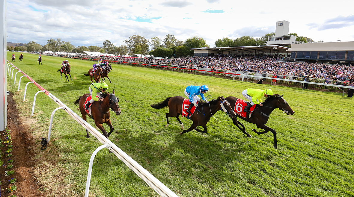 Albury Gold Cup 2015_Horses