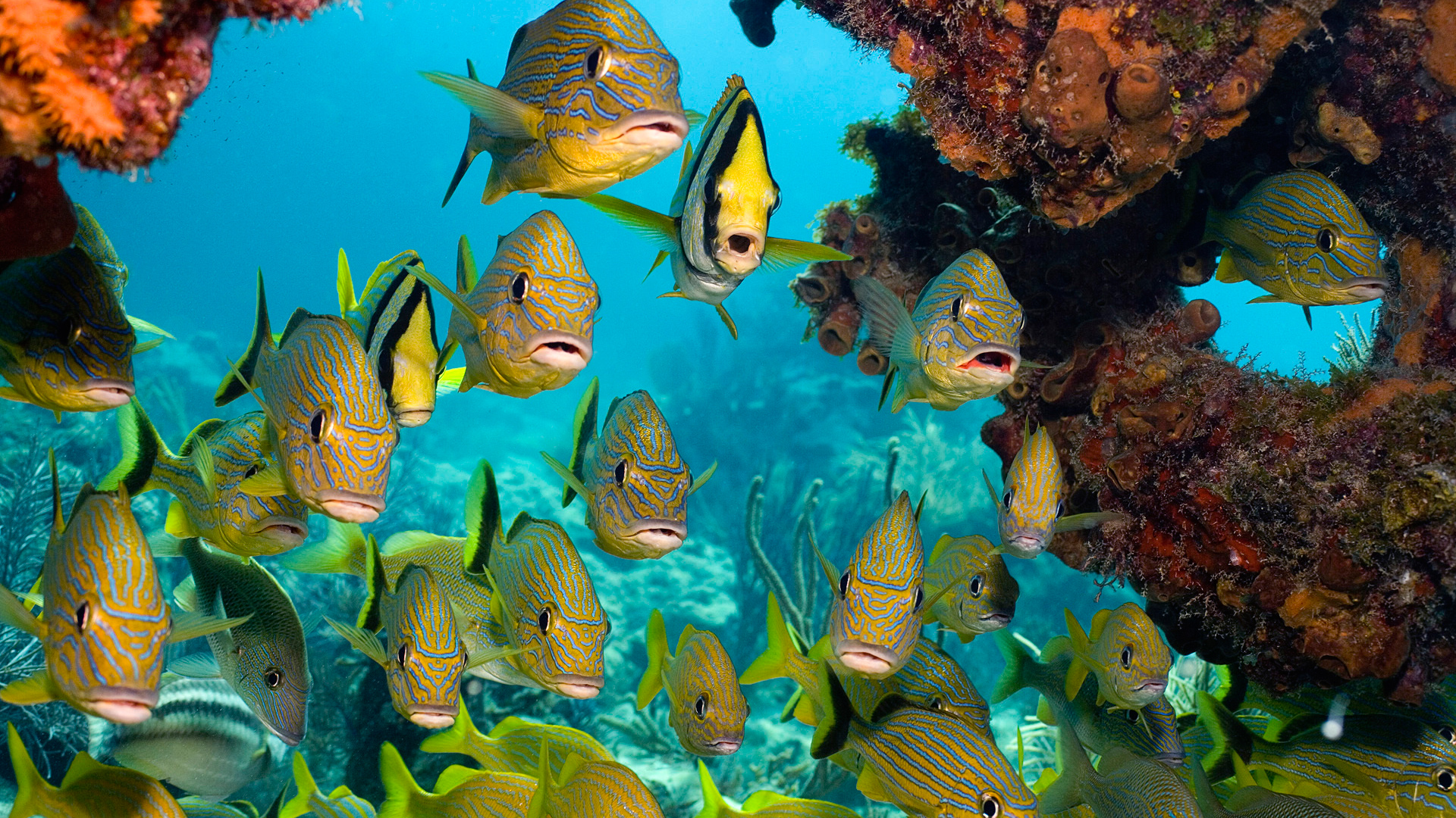 6910711-ocean-fish-pictures